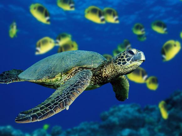 海底世界动物壁纸选集