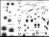 小动物脚印图片素材 eps格式