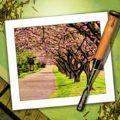 Moku Hanga木雕相机手机版app下载 v1.28