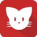 猫咪澳门金沙官网