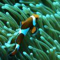 海洋动物拼图游戏