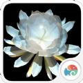 3D月下美人梦象动态壁纸app