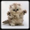 小猫图片大全app手机版下载 V4.3