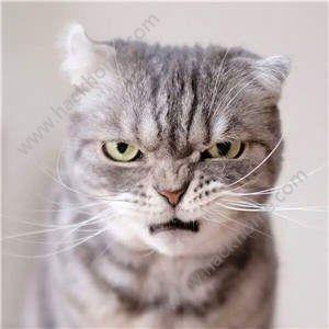 抖音社会猫斗图无水印表情包图片大全分享图片7_嗨客手机站图片
