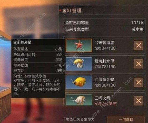 明日之后红海黄金蝶有什么用 红海黄金蝶怎么得[多图]图片2